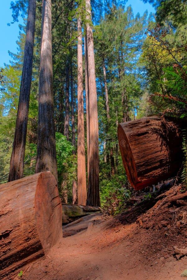 En smuts som går banan till och med skogen royaltyfria foton