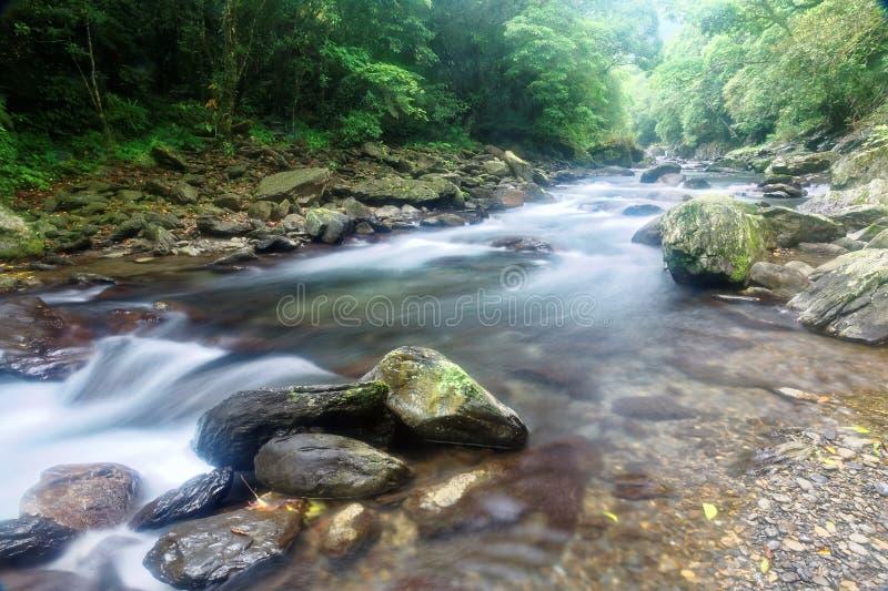 En snabb ström som flödar till och med en mystisk skog av frodig grönska royaltyfri foto