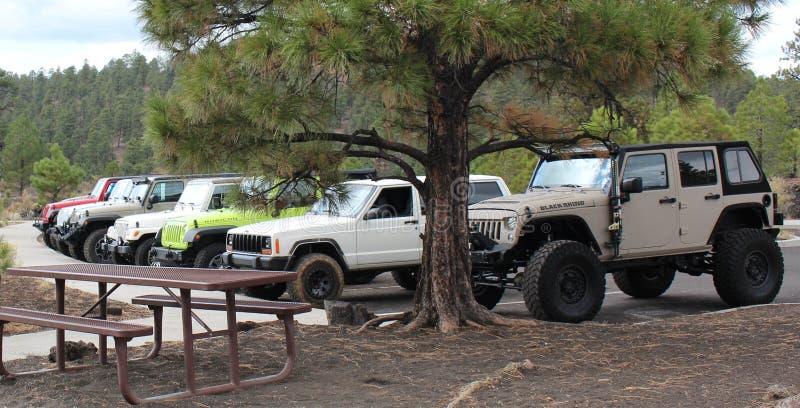 En snattra av jeepar i skogen royaltyfria bilder