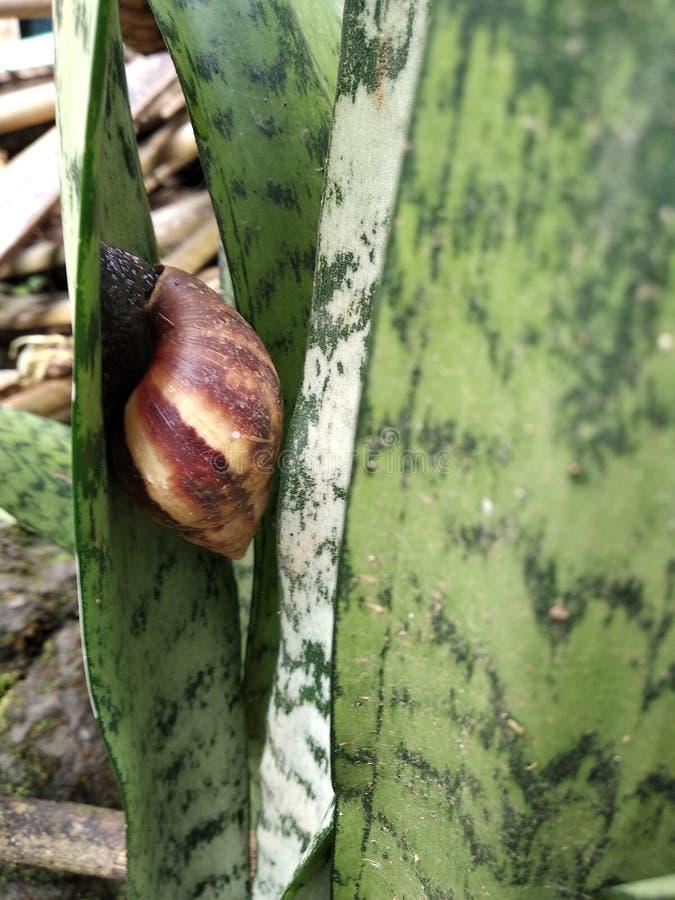 en snigel bak en växt royaltyfri bild