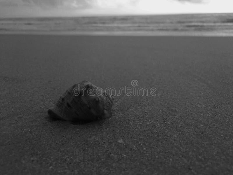 En snigel på stranden royaltyfri bild