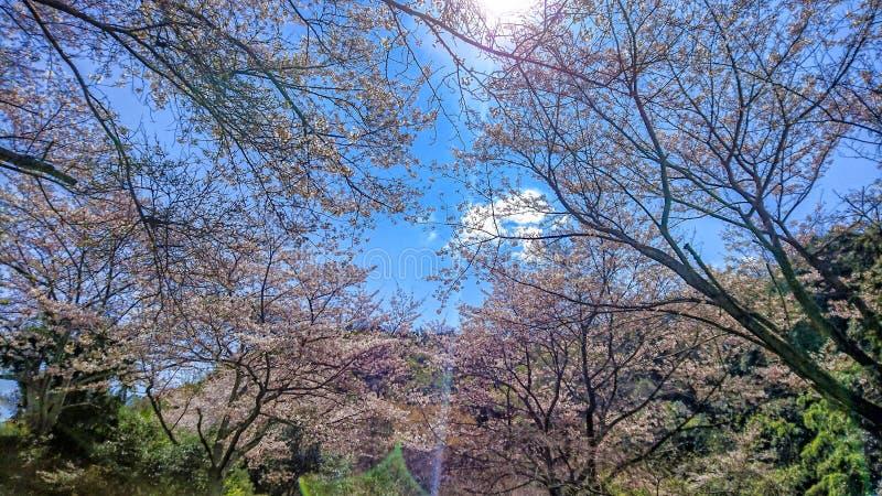 En solig dag i April arkivbilder