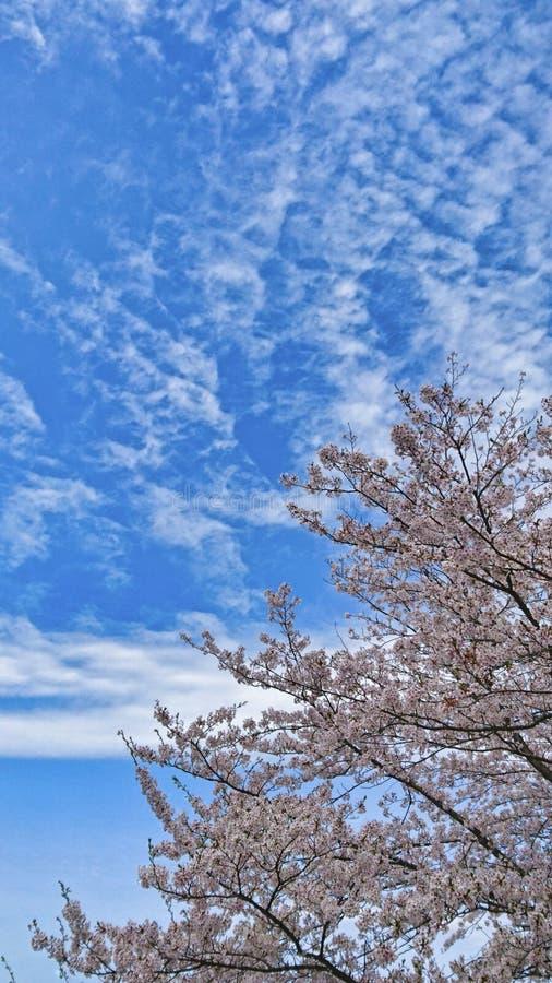 En solig dag i April arkivbild