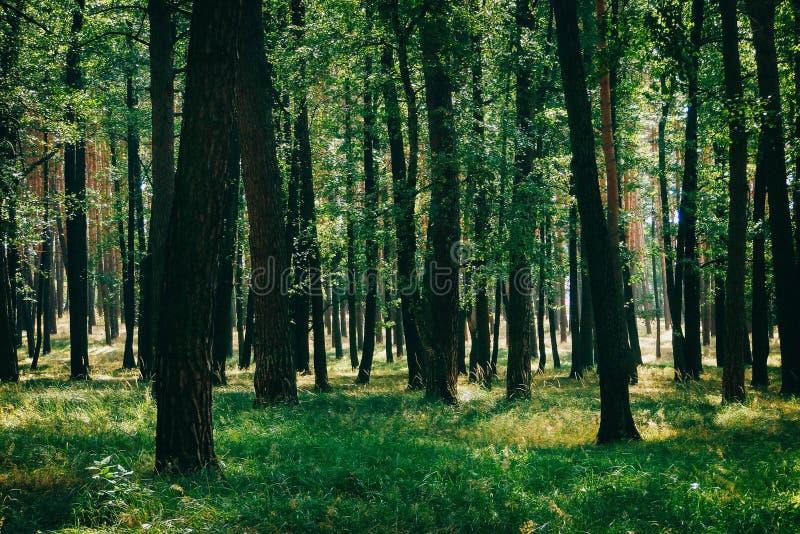 En solig dag i skogen royaltyfria bilder
