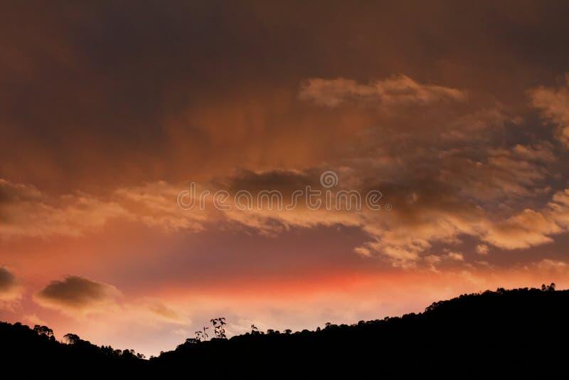 En solnedgång över träden arkivfoton