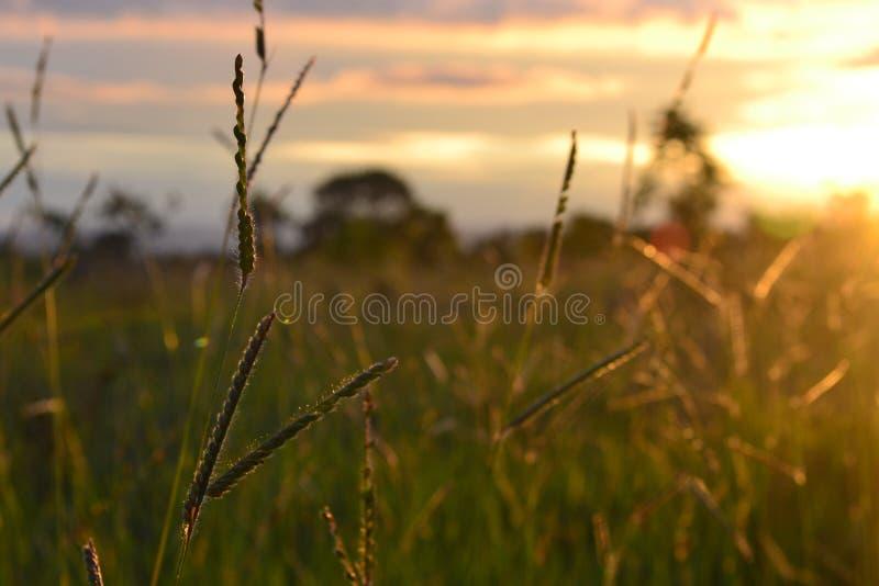 En solnedgång i Cerrado arkivfoto