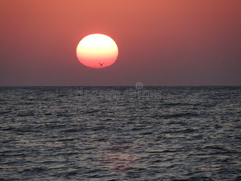 En solnedgång på Blacket Sea royaltyfri bild