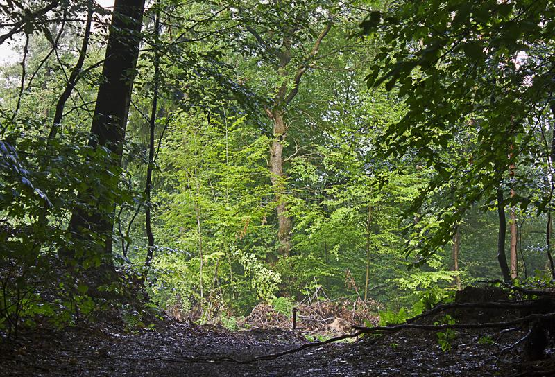 En sommarlövskog arkivfoton
