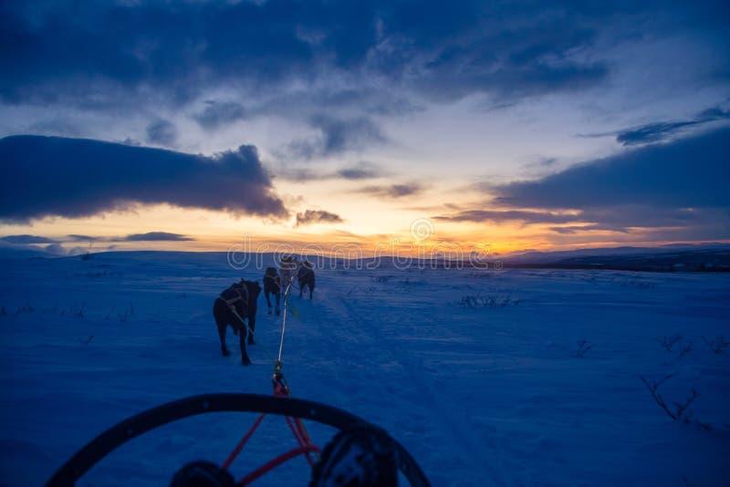 En spännande erfarenhet som rider en hundsläde i vinterlandskapet Snöig skog och berg med ett hundlag royaltyfri bild