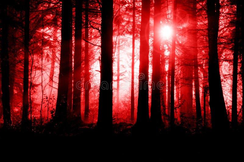 En spöklik dimmig skog, med träd silhouetted av panelljuset och glöda ljust i himlen Med ett kusligt science, fasa, royaltyfri foto