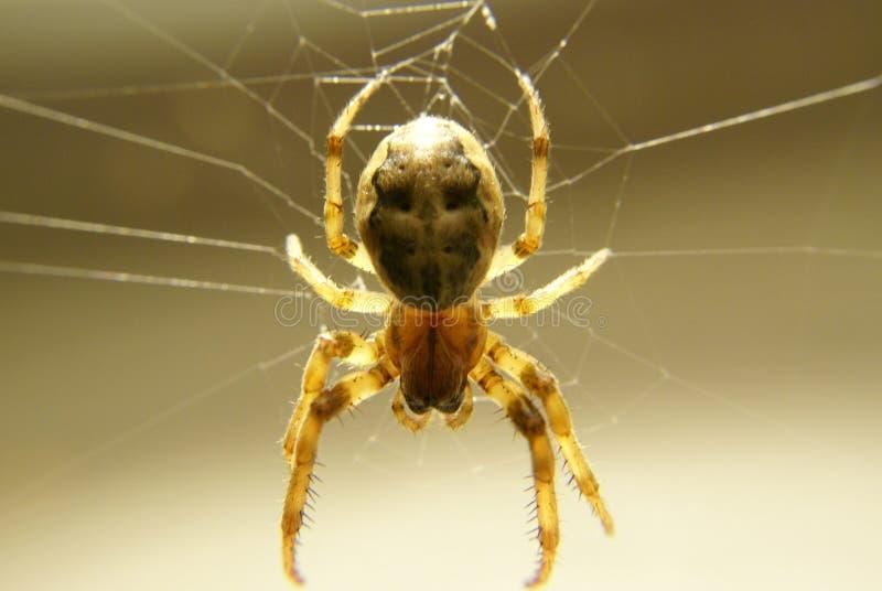 En spindel som hänger på hans rengöringsduk arkivfoton
