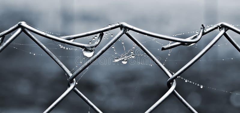 En spindelnät- och daggdroppe på en metallnet_ arkivbilder