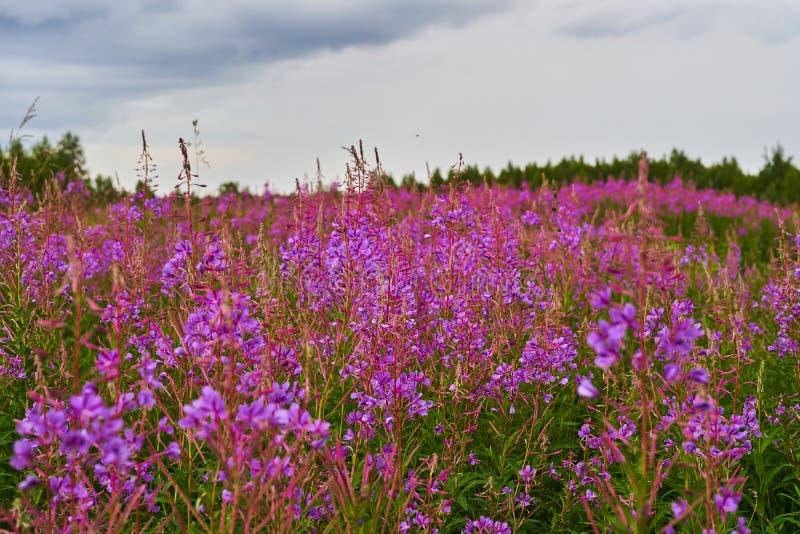 En spridning av lösa blommor på bakgrund för blå himmel royaltyfri bild