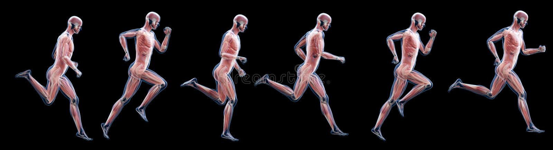 En spring mans muskler stock illustrationer