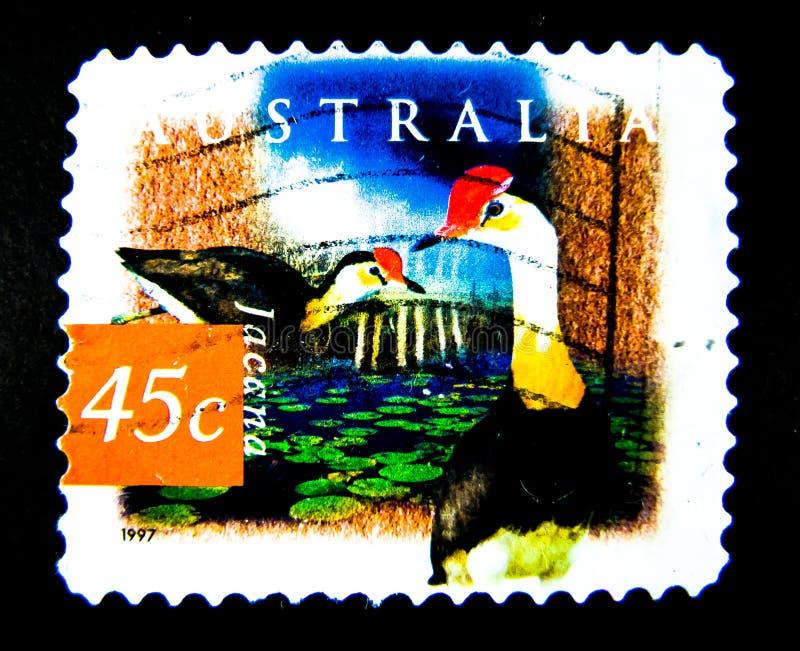 En stämpel som skrivs ut i Australien, visar en bild av den Jacana fågeln på värde på cent 45 royaltyfri bild