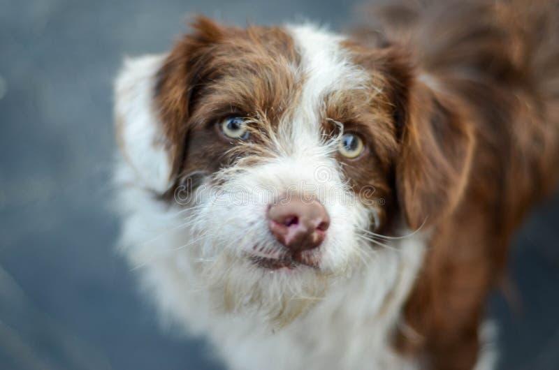 En stående av den härliga och snälla tillfälliga hunden Selektivt fokusera arkivbild