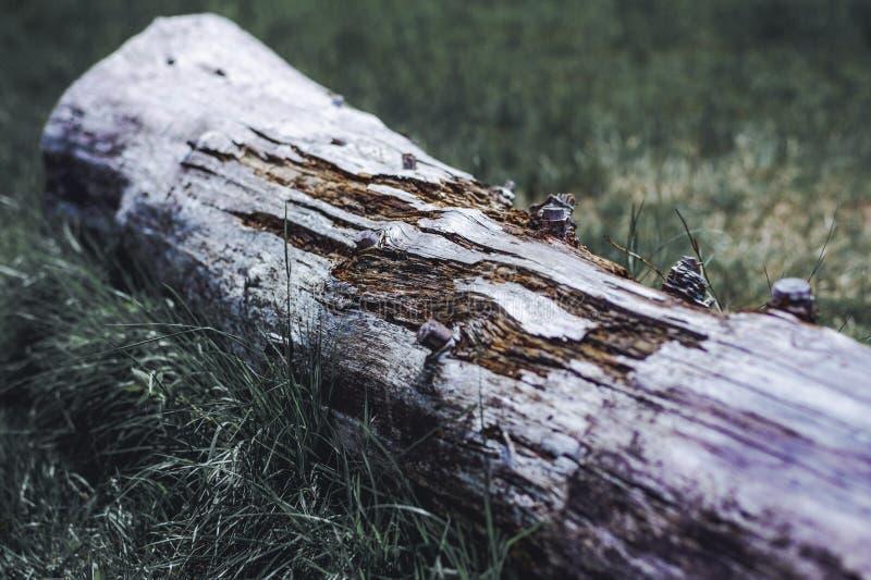 En stam i skogen, en kvarleva av ett gammalt träd Härlig wood textur med starka kontraster och färger royaltyfri fotografi