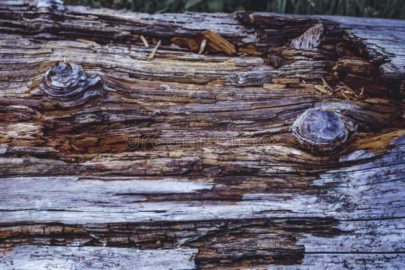 En stam i skogen, en kvarleva av ett gammalt träd Härlig wood textur med starka kontraster och färger royaltyfria foton