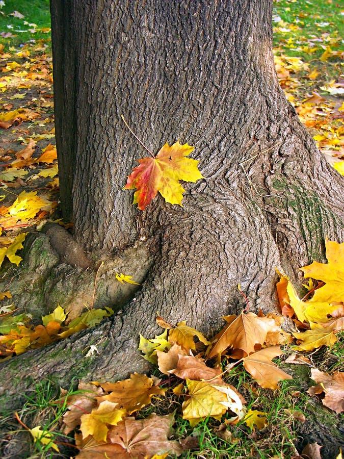 En stationnement dans le temps d'automne photographie stock libre de droits