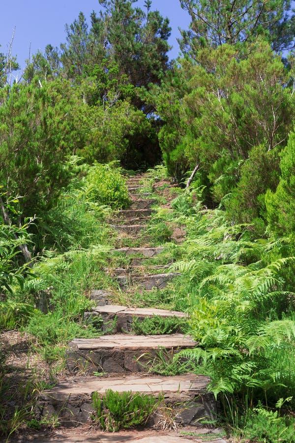 En stentrappa på en vandringsväg i bergen Madeira i Portugal royaltyfri foto