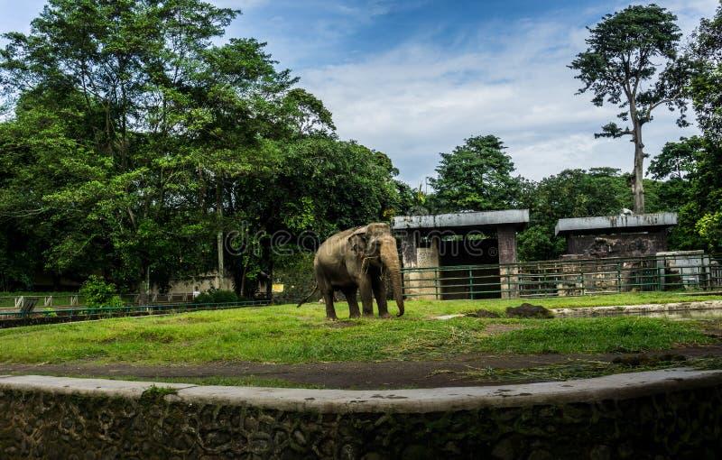 En stor elefant i buren med pölen som omger vid staketet och träd och härlig himmel som bakgrundsfotoet som in tas royaltyfri bild