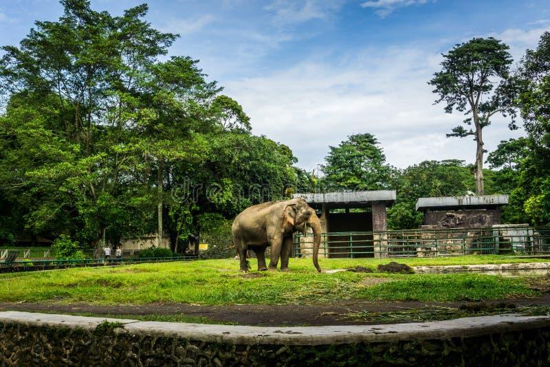 En stor elefant i buren med pölen som omger vid staketet och träd och härlig himmel som bakgrundsfotoet som in tas royaltyfria bilder