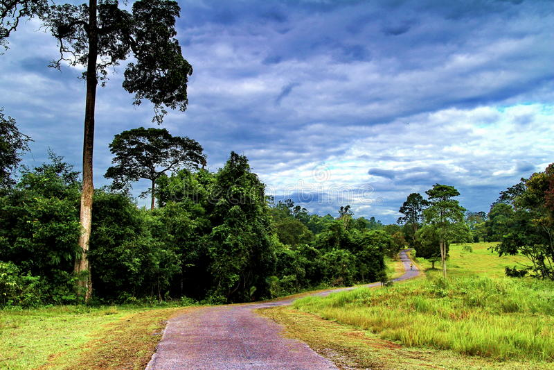 En stor hög träd och gångbana på Kao Yai National Park, Thailand arkivbilder