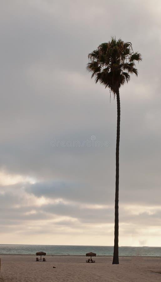 En stor palmträd på en strand royaltyfria bilder