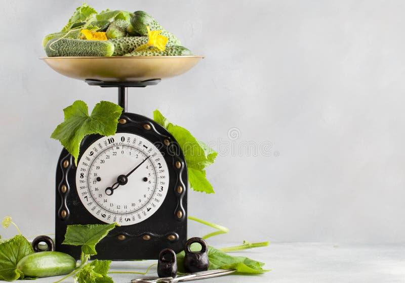 En stor platta av gurkor är på kökskalan arkivfoto