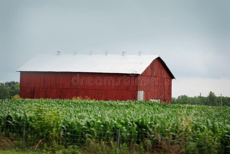 En stor röd ladugård med det vita taket i lantliga Kentucky royaltyfria bilder
