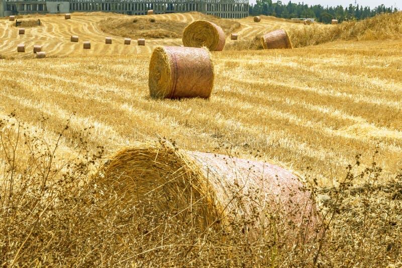En stor rund bal av sugrör för djur matning Foder för boskap Naturligt landskap f?r bygd fotografering för bildbyråer