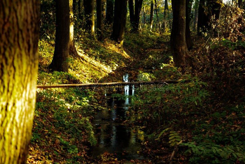 En ström av vatten i skogen arkivfoton