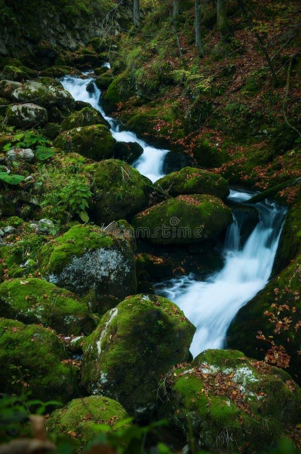 En ström av vatten som flödar över mossigt, vaggar i hösten royaltyfri foto