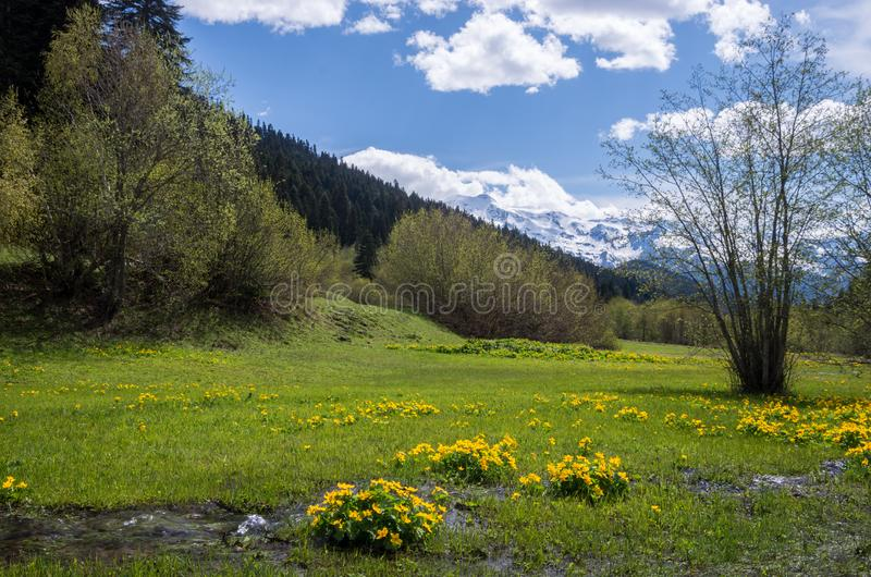 En ström i en bergdal på en solig dag mot bakgrunden av snö-korkade berg blommar ängyellow arkivbild