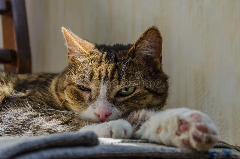 En strimmig kattkatt med ett begränsat öga ligger på en stol Sinnesrörelser av förakt, misstro, likgiltighet royaltyfria bilder