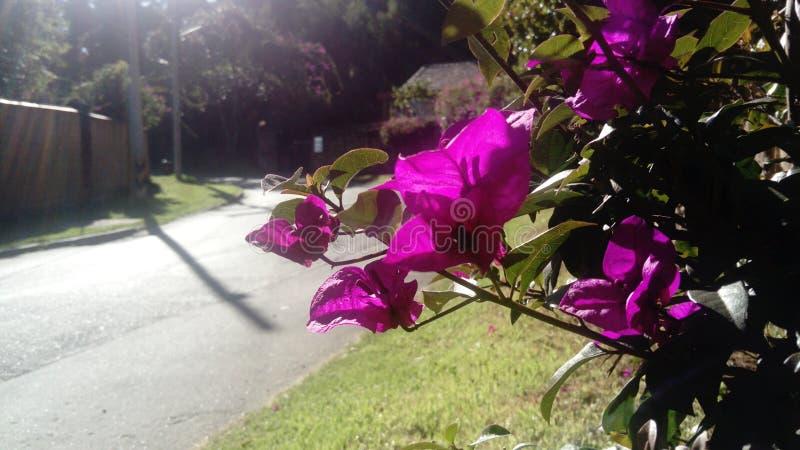 En Suba de Flores,  imagens de stock
