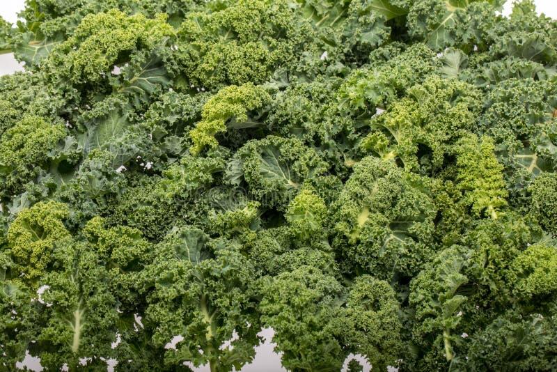 En sund ny lockig grönkål fotografering för bildbyråer