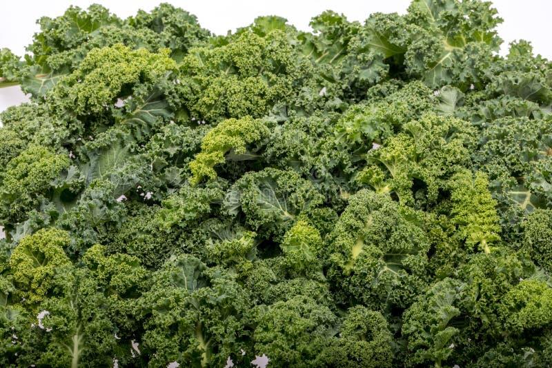 En sund ny lockig grönkål royaltyfri fotografi
