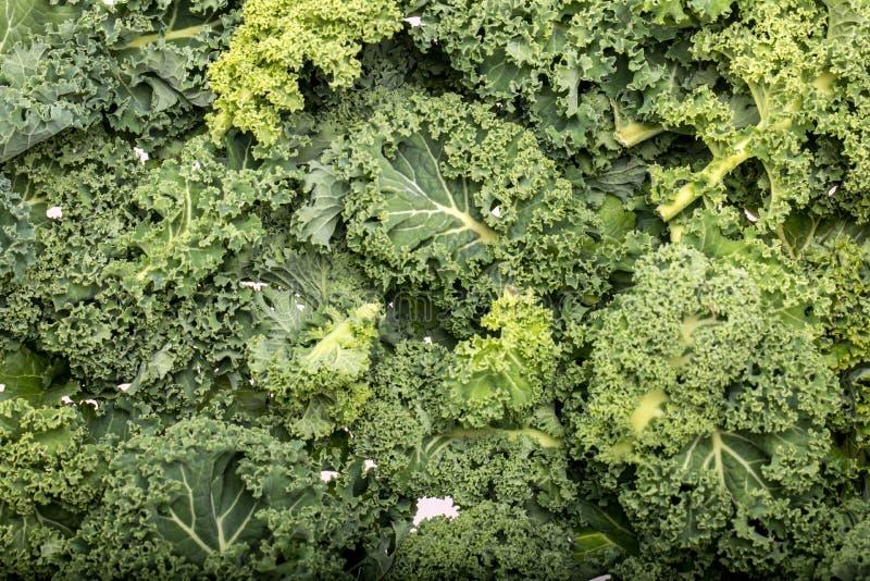 En sund ny lockig grönkål arkivfoto