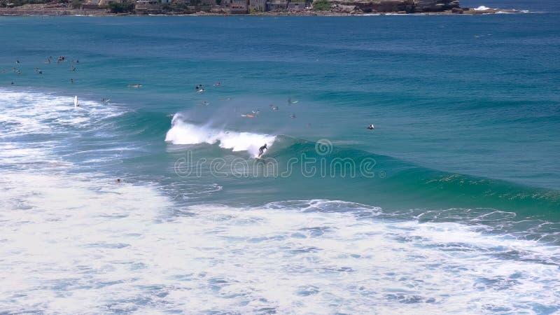 En surfare rider en våg på bondistranden, Australiens berömda strand royaltyfri bild