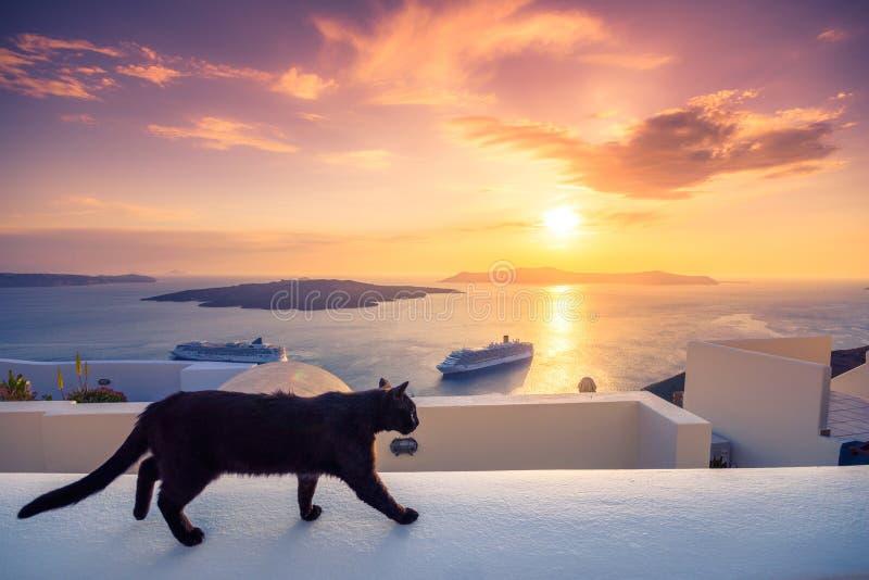 En svart katt på en avsats på solnedgången på den Fira staden, med sikt av calderaen, vulkan och kryssningskepp, Santorini, Grekl royaltyfri bild