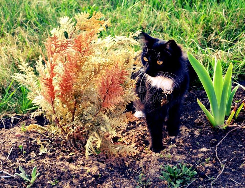En svart katt på grönt gräs arkivfoto