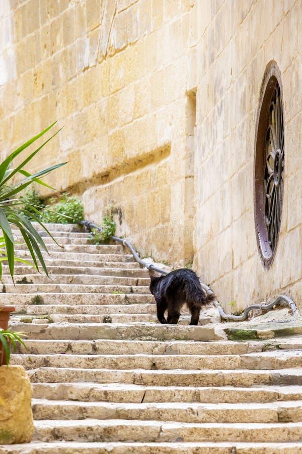 En svart långhårig katt på yttre moment för kalksten arkivbilder
