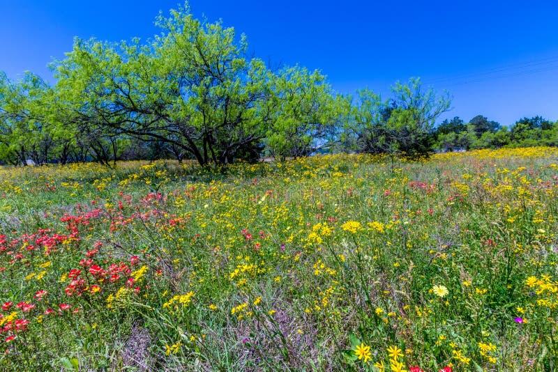 En Texas Field Full av en variation av härliga vildblommor arkivfoto