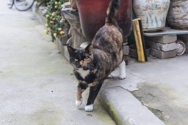 En tillfällig katt som bor på kanten av staden arkivfoton