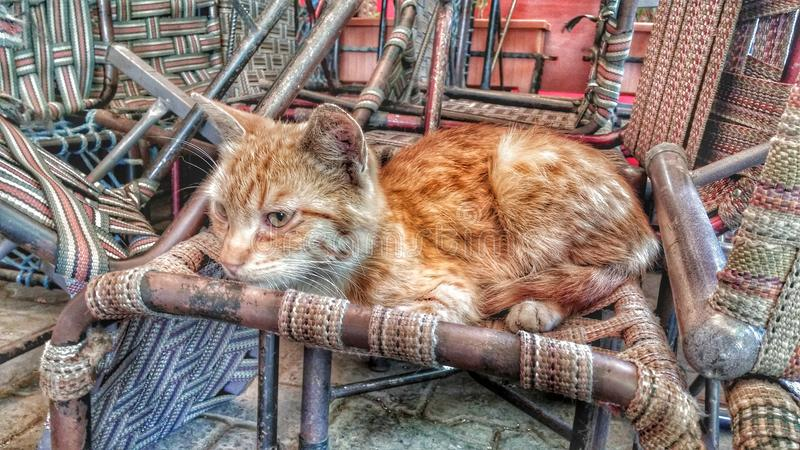 En tillfällig katt som vilar på stolar royaltyfria bilder