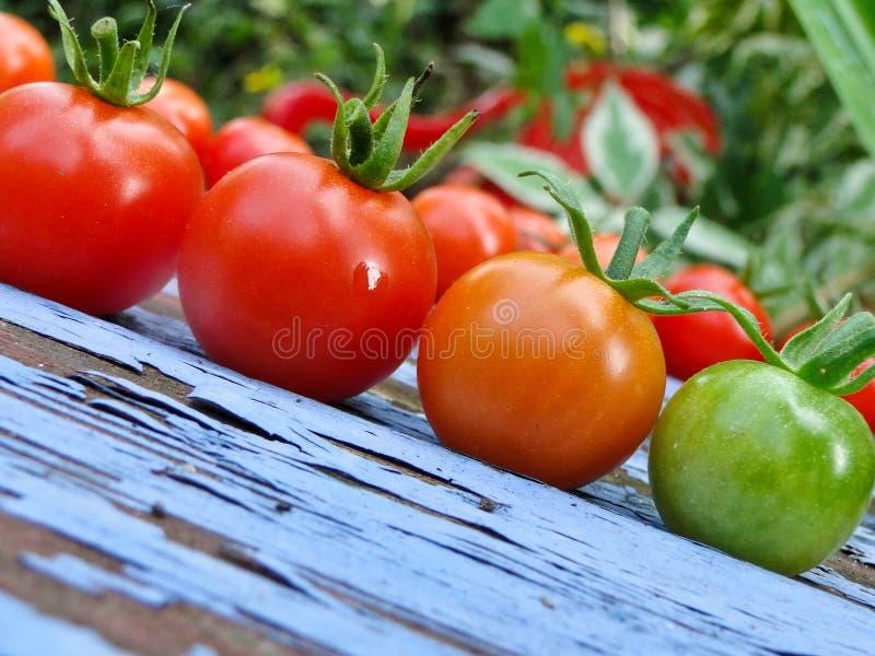En tomat, tomat två på blå bänk arkivbild