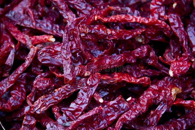 En torr chili för hög royaltyfri bild