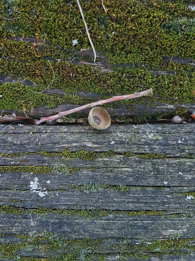 En träbänk som täckas med mossa fotografering för bildbyråer