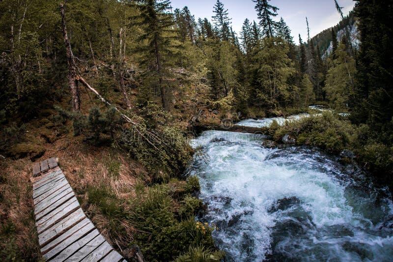En träbro över en snabb bergström i Taiga den boreala skogen royaltyfri foto